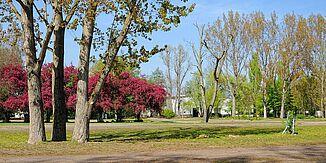 agra Freifläche im Frühling